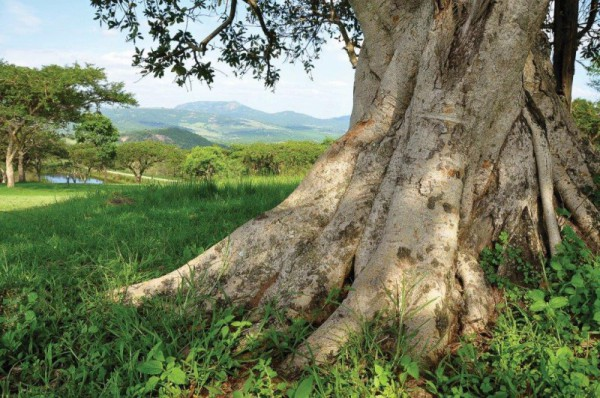 With 765 hectares of undisturbed natural landscape, Likweti boasts a massive variety of trees