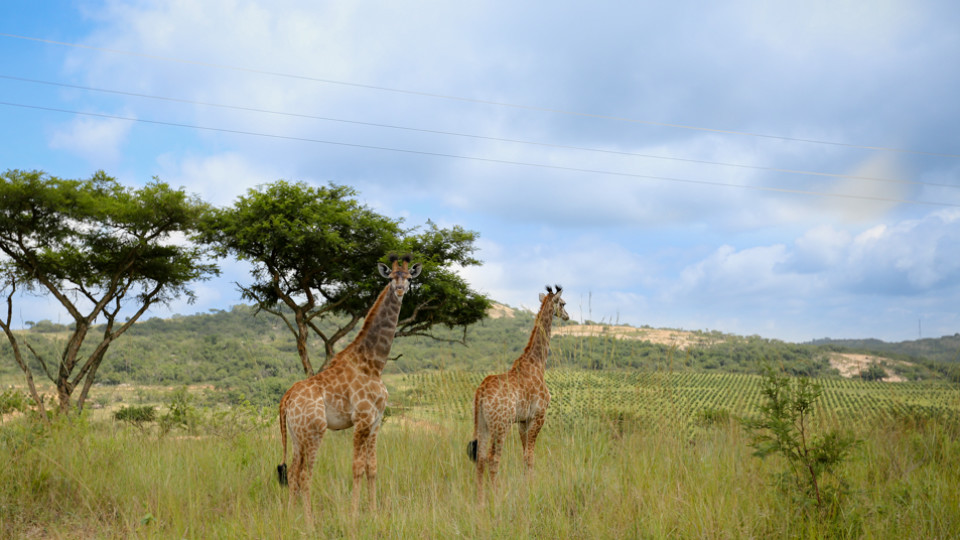 Wildlife at Likweti Estate