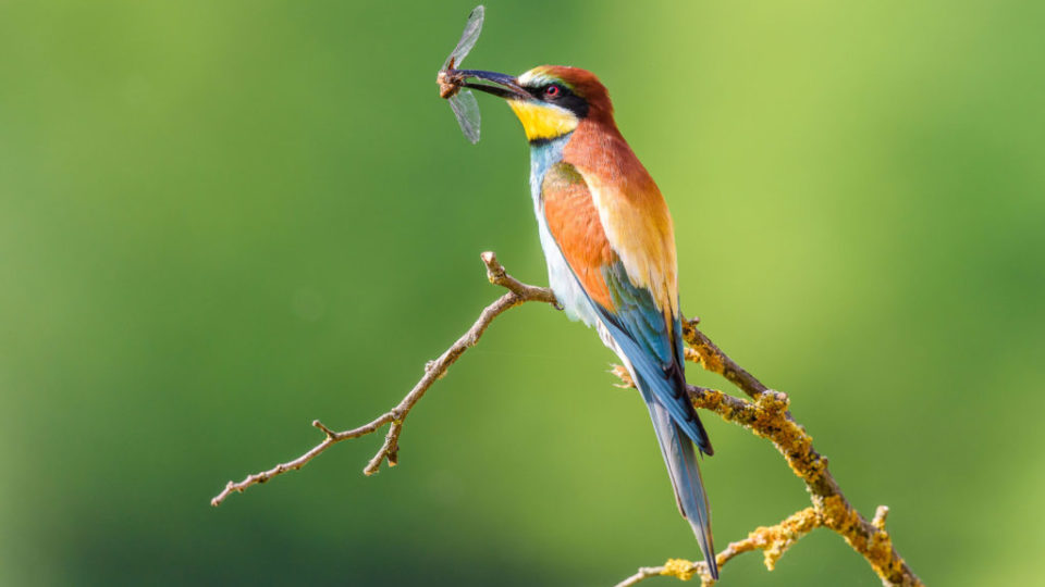 Bee-eater in natural Oasis